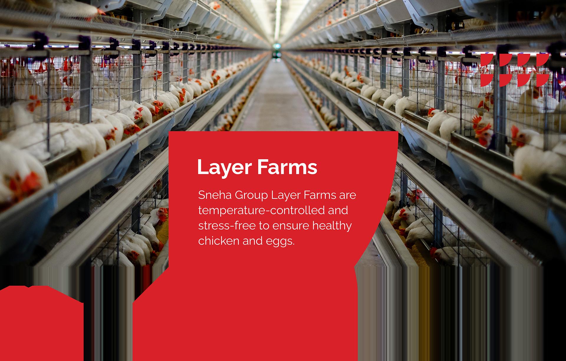 Layer Farms Cover